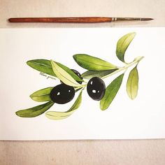 Watercolor olive 🌿 Watercolor Walls, Watercolour Painting, Watercolor Flowers, Painting & Drawing, Water Drawing, Food Drawing, Botanical Drawings, Botanical Prints, Watercolour Tutorials