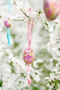Diy painted eggs hanging from plum tree in spring garden | Laura Stolfi for Stocksy United