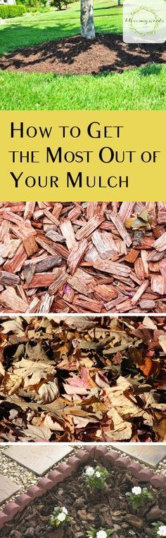 How to Get the Most Out of Your Mulch | Bless My Weeds