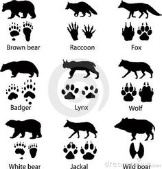 "Find ""wolf silhouette"" stock images in HD and millions of other royalty-free stock photos, illustrations and vectors in the Shutterstock collection. Wolf Silhouette, Animal Footprints, Animal Tracks, Badger, Illustrations Posters, Bushcraft Equipment, Bushcraft Skills, Camping, Wild Animals"