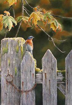 Country Garden Bluebird by Susan Bourdet  (Click to close)