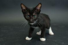 black-shelter-cat-pictures-6