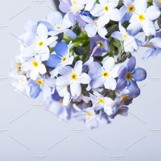 Forget-me-not flower background by oksix on @creativemarket