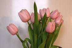 One pink tulip amongst peonias?