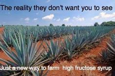 The Truth About Agave Nectar