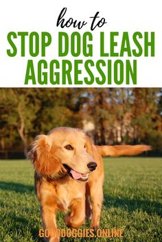 Stop Dog aggression on walks. Check out these dog training tips on how to stop leash aggression.