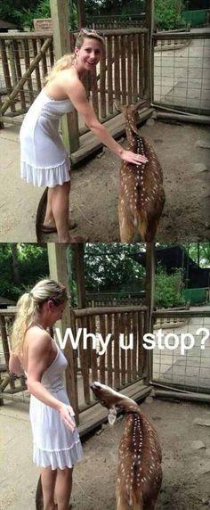 Funny animals | Humor24.biz