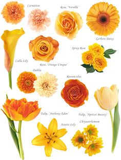 """- Flower names by Color Have you ever found a picture of a bouquet and wondered, """"What is that flower?"""" Here is a collection of flower names sorted by color. A few bouquet examples are at the bottom and so… Peach Flowers, Fresh Flowers, Colorful Flowers, Beautiful Flowers, Bouquet Flowers, Orange Flower Names, Pretty Flower Names, Flower Colors, Shade Flowers"""