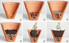 como plantar suculentas en macetas. su interior