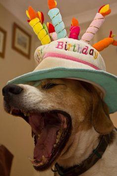 Happy Birthday beagle LOL