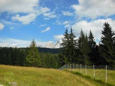 Lo scenario delle Pale di San Martino dal parco Naturale di Paneveggio
