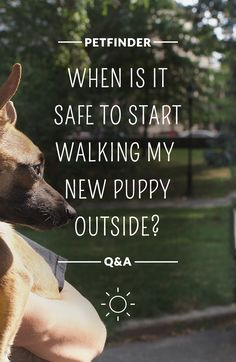 """Welcoming a new puppy home is exciting, and it's normal to have plenty of questions. One of the most common questions from new parents is """"when is it safe to start walking my new puppy outside?"""" While your instinct may be to protect your new pup from the outside world, giving him or her plenty of outdoor time is crucial. Make sure your dog is equipped with tags, a secure collar, is on a leash and is microchipped before taking those first steps around the neighborhood."""
