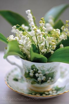 Lily of the Valley Tea Cup Bouquet, This photo leads directly to the post it was created from even though it is not in it itself. There are lots of lovely lily of the Valley photos. Cut Flowers, Fresh Flowers, Spring Flowers, White Flowers, Beautiful Flowers, Arreglos Ikebana, Lily Of The Valley Flowers, Deco Floral, Perennials