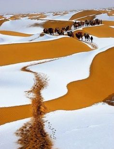 janetmillslove:Winter Snow, Sahara moment love