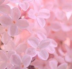 Imagem de pink flowers and rose p i n k pinterest pink more information mightylinksfo