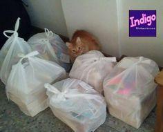 Hasta Carlos está a full trabajando para #Indigo!!! Los #Combos son un éxito!!! Pronto se vienen nuevos!!!