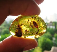 Types of Amber | Geology IN   Burmese amber - also known as burmite, is a Cretaceous age amber up to 99 million years old found mainly in the Hukawng Valley, Kachin State, Myanmar (Burma). The most common amber containing insect inclusions of the Cenomanian.
