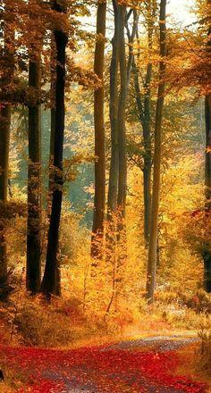 Autumn Beauty!