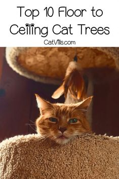 If you're looking for the best floor to ceiling cat trees I've got you covered! Check out my top 10 favorites from space-savers to total kitty gyms! Shelter Dogs, Animal Shelter, Animal Rescue, Chihuahua Dogs, Pet Dogs, Pets, Modern Cat Furniture, Furniture Design, Huge Cat