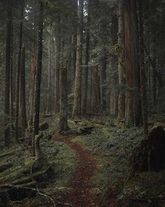 """silvaris: """" Gifford Pinchot National Forest by chalenaheston """" Dark Green Aesthetic, Nature Aesthetic, Once Upon A Tome, Gifford Pinchot National Forest, Images Harry Potter, Slytherin Aesthetic, Dark Paradise, Aesthetic Pictures, Hogwarts"""