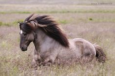 Awesome Looking Wild Mustang.