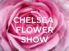 THE CHELSEA FLOWER SHOW 2015 GARDENS Medal Winners Chelsea Flower Show 2015 Show  Gardens A Perfumeru0027s