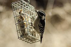 Cold weather and lots of snow can be very tough on birds but you can help by following these winter bird feeding tips.