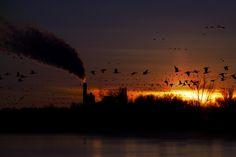Photo Gone With the Sun par Matt Molloy on