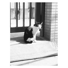 A cat in Yanaka. #japantravel #tokyo #cat #catsofinstagram #yanaka