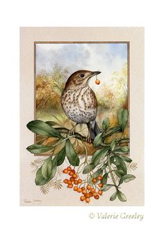 Garden thrush print by acornmoon on Etsy, by my lovely friend Valerie :) Watercolor Images, Watercolor Bird, Watercolor Illustration, Decoupage, Bird Artwork, Bird Crafts, Inspirational Artwork, Illustrations, Beautiful Artwork