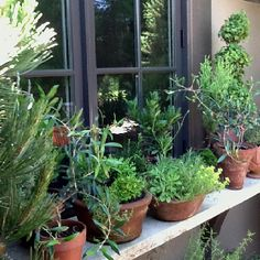 624 Best Herb Garden Ideas Images On Pinterest Herb Garden
