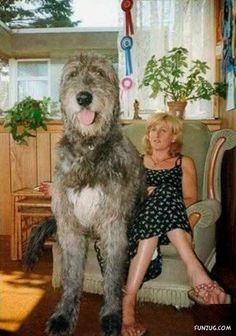 Giant Dogs Around the World