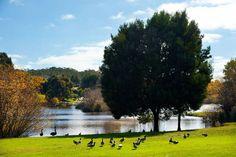 Ducks Bay | Daylesford, VIC | Accommodation