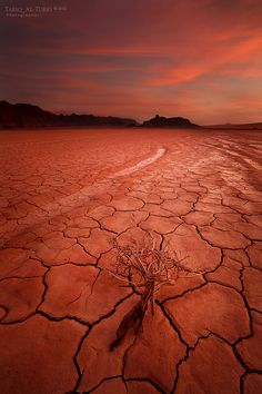 "500px / Photo ""Drought"" by Tarik AlTurki. this looks sooo prestoric!"