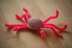 wallnut octopus
