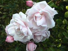 agencja randkowa białej róży