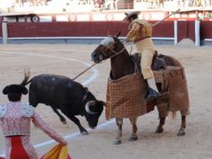Bullfighting may soon be taught in schools to young boys in Spain. This sport is inhumane and outdated; urge the Ministry of Education to not go forward with such an irresponsible decision.