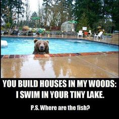 I'd say it's a fair trade-off! Funny real esate, house, and home humor. I'd say it's a fair trade-off! Funny real esate, house, and home humor. Humor Animal, Animal Memes, Funny Animal Pictures, Funny Animals, Cute Animals, Wild Animals, Bear Pictures, Funny Cute, The Funny