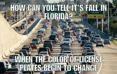 Living in Florida isn't always easy, but we wouldn't choose to live anywhere else. Living anywhere is a lot easier if you learn to laugh at yourself. Funny Facts, Funny Memes, Jokes, Hilarious, Car Memes, Random Facts, Florida Meme, Florida Girl, Moving To Florida