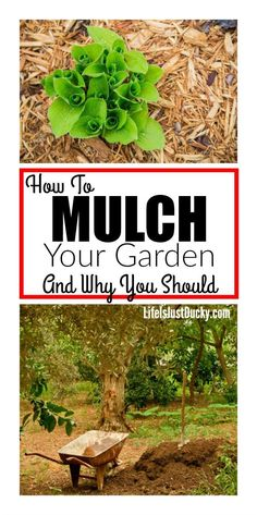 , Why should you mulch your vegetable garden? Here are some tips and ideas for keeping your backyard garden beds and pathways weed free and have healthi. , Mulch For Your Vegetable Garden Mulch For Vegetable Garden, Vegetable Garden Planner, Container Gardening Vegetables, Vegetable Garden Design, Veggie Gardens, Garden Types, Gardening For Beginners, Gardening Tips, Organic Gardening