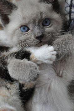 oldandshabby:  (via Pin by ༺♥ Laura Ferry ♥༻ on ✼ glorious grey ✼ | Pinterest)