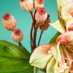 Jungle, amaryllis, pavot et philodendron - Photo Sophie Plouvier