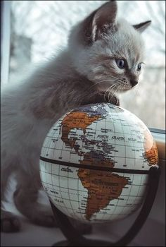 globe trotting kitten More