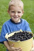42-26498484 Boy with bucket of blackberries