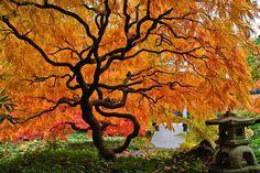 Jamás Había Visto Unos Árboles Tan Espectaculares | Naturaleza - Todo-Mail