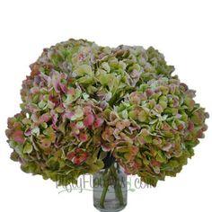FiftyFlowers.com - Giant Hydrangea Light Antique Flower
