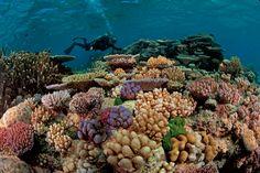 """Résultat de recherche d'images pour """"recif corallien"""""""