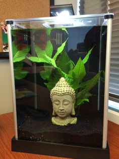 My 2.6 gallon Fluval Spec 3 aquarium for my new Betta fish, Bruce Lee.  Bringing a little Zen to my office.