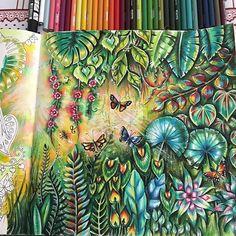 Uma página da #magicaljungle #johannabasford feita na #watercolor #aquarela com finalização em #lapisdecor #prismacolor #prismacolorpencils  #coloringbookforadults #coloringbook #coloringbooks #livrosdecolorirparaadultos #livrosdecolorir #Repost @dreams.colors with @insta.save.repost • • •