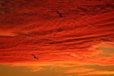 ... tra le rossastre nubi stormi d'uccelli neri, com'esuli pensieri, nel vespero migrar...